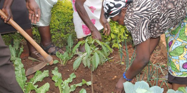 trees-planting